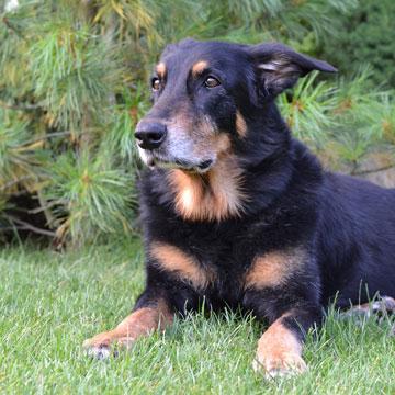 výcvik psů Praha - východ