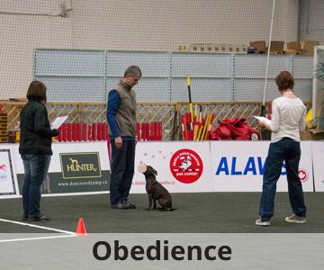 výcvik psů Obedience