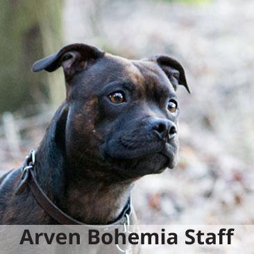 Arven Bohemia Staff