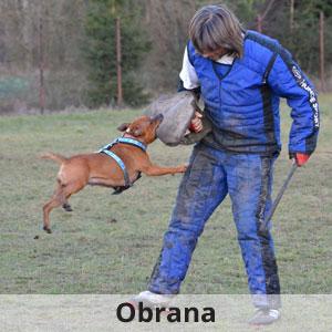 obrana, výcvik psů